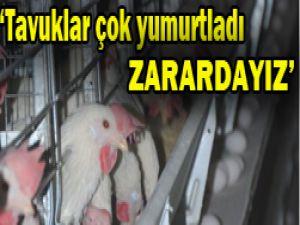 Yumurtacılar tavuktan şikayetçi