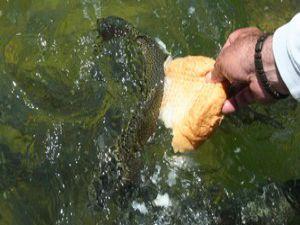 Süs balıklarını kendi elleriyle besliyor