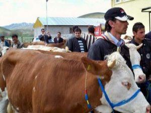 Karapınarda süt ineği dağıtımı