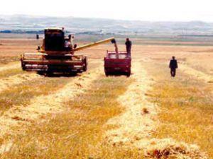 Sarayönünde hasat sezonu başladı