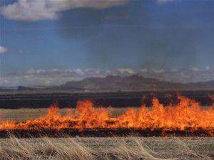 Çumrada 180 dekar alan yandı