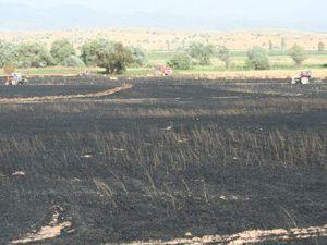Beyşehirde 150 dekar alan yandı