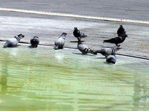 Güvercinlerin keyfi yerinde!