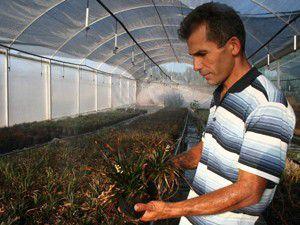 Avrupanın süs bitkileri Konyadan