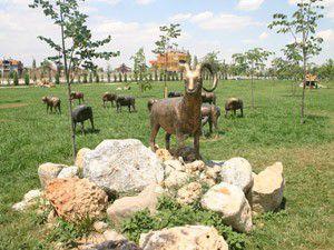 Yaban Koyunları parkta ortaya çıktı