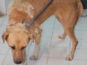 Sokak köpeğine şişeli şiddet