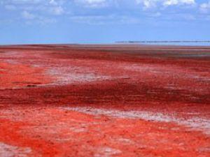 Tuz Gölü kırmızıya boyandı