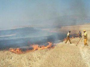 Hüyük ve Beyşehirde anız yangını