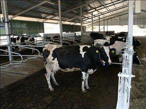 Hayvancılık projesiyle Çamlıkın kaderi değişecek