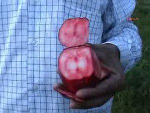 Elmanın içi de dışı da kırmızı!