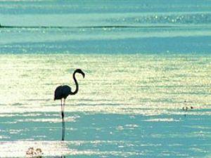 Tuz gölü için kurtarma yolları