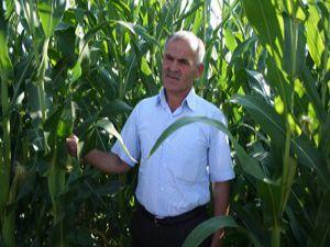 Beyşehirde çiftçiye ikinci ürün müjdesi