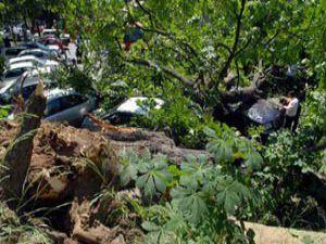 Konyada ağaçtan düşen kişi yaralandı