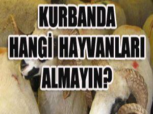 Bu hayvanları sakın alamayın!