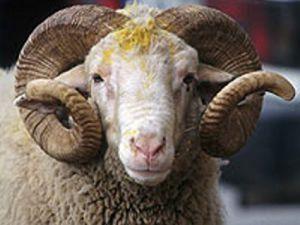 Bir yılda kaç hayvan ithal edildi