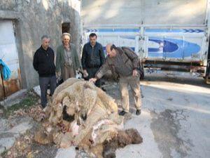 THK, Sarayönünde 469 deri topladı