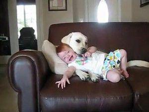Bebekle Köpeğin İnanılmaz aşkı