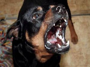 Köpekler Çocuğa Saldırdı
