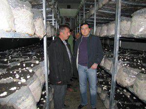 Konyada kültür mantarı ürretim tesisi açıldı