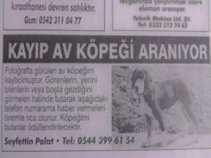 Kayıp köpeğe gazete ilanı