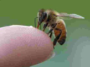 Konyada bir kişi arı kurbanı