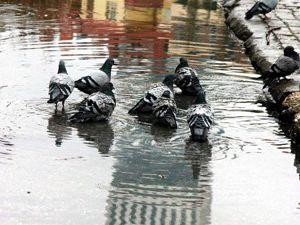 Yağmurlu havada kuşların keyfi