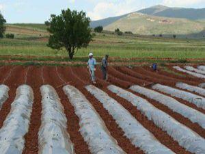 Hüyükte çiftçilere çilek eğitimi verilecek
