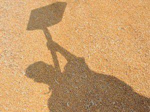 Konya Ovasında çiftçi ürünün kalitesinden umutlu