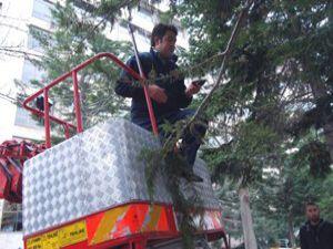 Konyada sığırcık kurtarma operasyonu