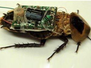 Afetzedeleri kameralı böcekler kurtaracak