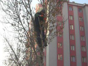 Ereğli Belediyesi ağaç budama çalışması başlattı
