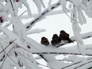 Karlı havalarda yiyecek bulamıyorlar