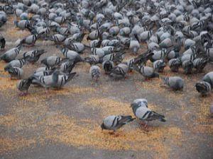 Büyükşehir kuşları yalnız bırakmadı
