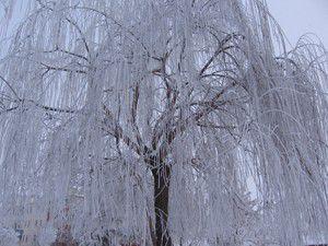 Çeltikten kış manzaraları
