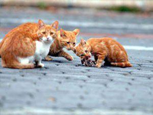 Kedi ve köpekler kayıt altına alınacak