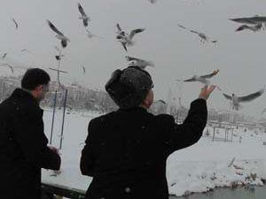 Başkan Taşçı su kuşlarını besledi