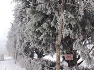 Konyada ağaçlar beyaza büründü