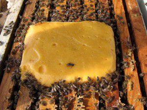 Arılara kek takviyesi