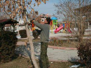 Karatayda ağaçların budama çalışmaları yapıldı