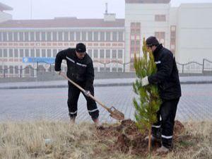 Meramın ağaçlandırma çalışmaları sürüyor