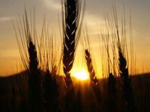 Desteklenecek 30 tarım havzası