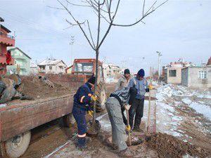 Karatayda ağaçlandırma çalışmaları yapılıyor