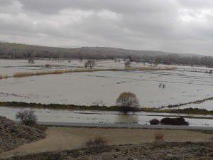Beyşehirde 4 köyde tarım arazileri sular altında