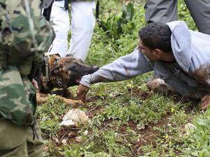 İsrail askerinin köpekli işkencesi