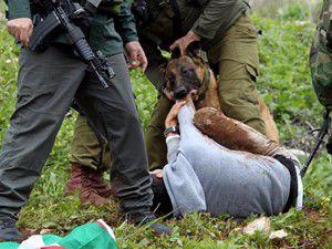 Filistinli gence köpek işkencesi!