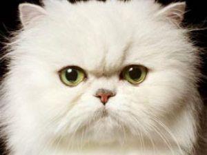 Aslında kediler insanları yönetiyor
