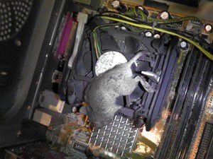 Bu tam da bilgisayar faresi