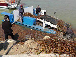 Beyşehir Gölünde kıyıya vuran kamışlar toplanıyor