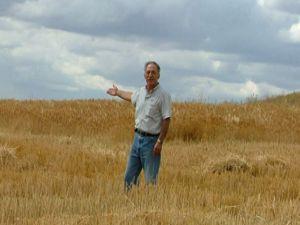 Tarladan buğday hırsızlığı