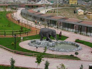 Hayvanat bahçesine 5 metrelik piton